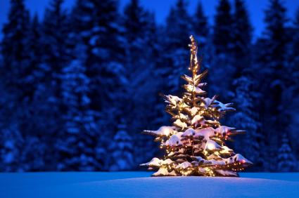 pic-xmas tree 2011-12